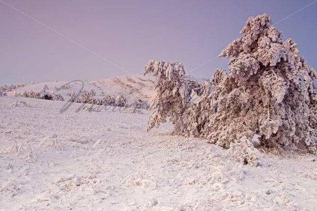 Frozen trees with snow in the mountains at the sunrise – Stock photos from around the world