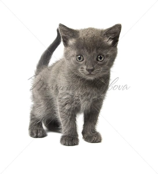 Little gray kitten – Stock photos from around the world