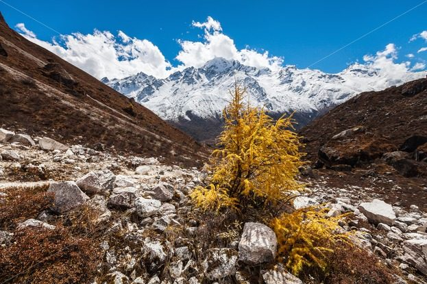 Autumn in the Himalayas – Stock photos from around the world