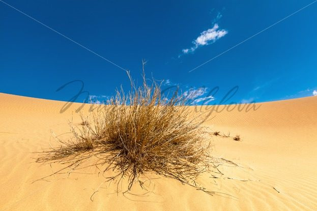 Bush of dry grass in the desert – Stock photos from around the world