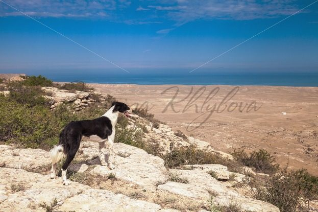 Dog is watching to the far sea – Stock photos from around the world
