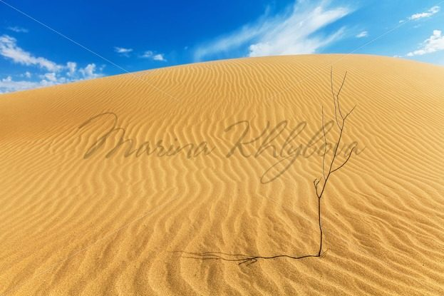 Dried small tree in the desert – Stock photos from around the world