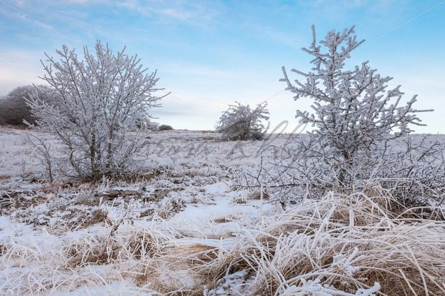 Frosted trees and grass – Stock photos from around the world