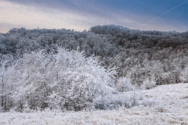 Several frosted trees against the wooded hills – Stock photos from around the world